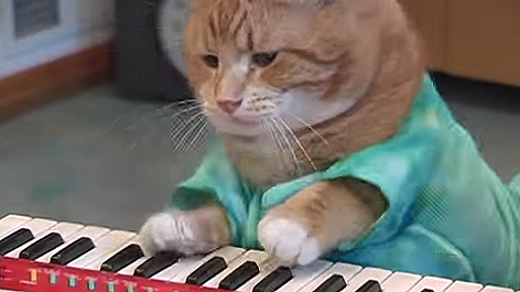 hobnocker-keyboard-cat